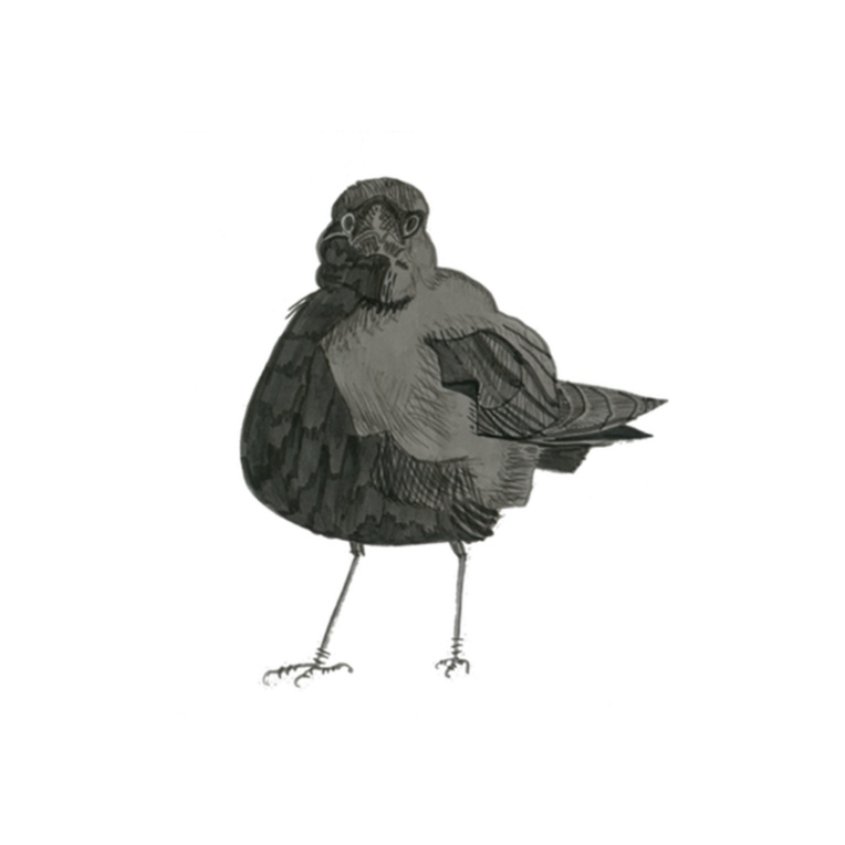crow-for-sticker