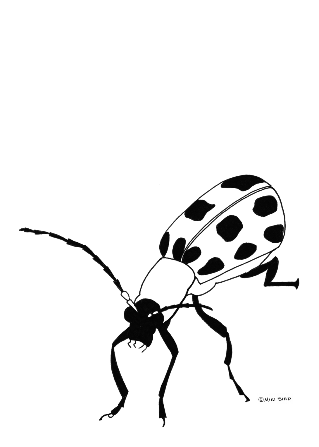 cucumber-beetle-png